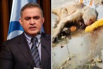 Detienen en Aragua a uno de los asesinos del mono alcoholizado con anis 1