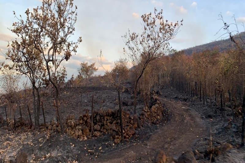 Alerta por dos incendios forestales activos en Palermo, Huila (fotos) 1