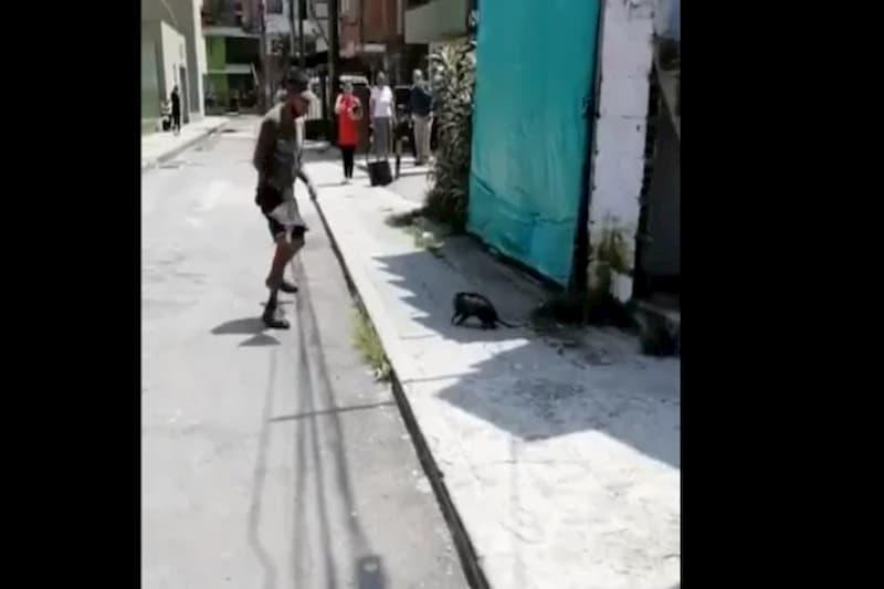 Vecinos mataron a golpes a indefensa zarigüeya en plena vía de La Estrella, Antioquia (video) 1